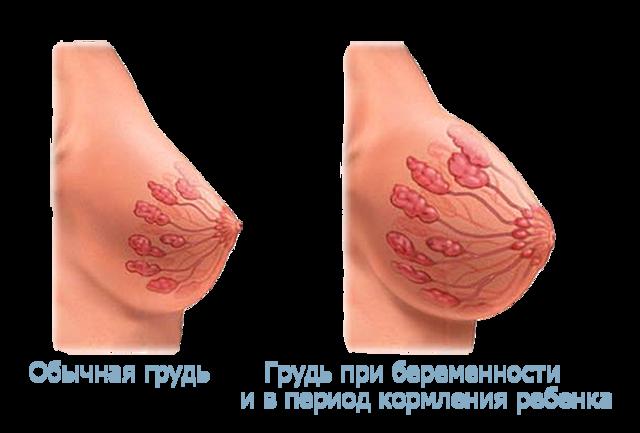 Как понять, что беременности протекает нормально на ранних сроках: признаки благоприятного и патологического течения гестации