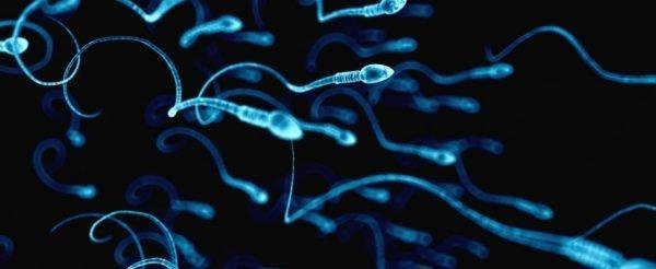 Зачатие во время месячных: почему оно происходит?