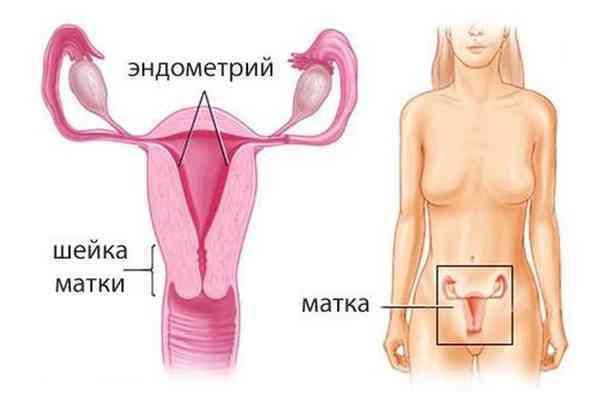 Трехслойный эндометрий: структура, причины появления, особенности