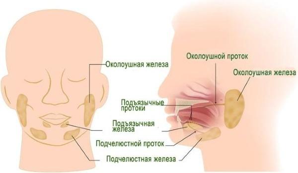 Повышенное слюноотделение при беременности: причины возникновения, опасность, способы лечения