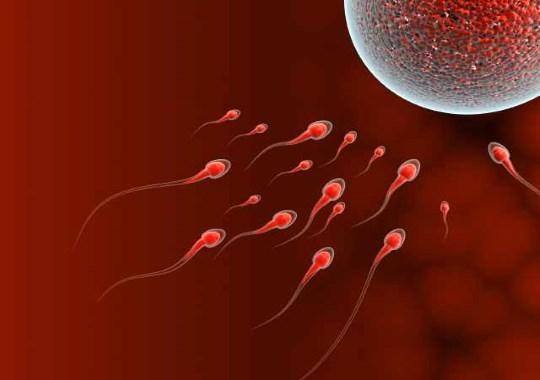 Дни зачатия после месячных: возможно ли это?