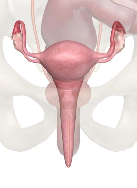 Миома матки малых размеров: особенности развития и лечения